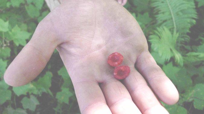 thimble berry 1